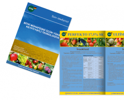 Creation of brochures for DVA in Moldova